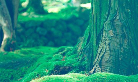 green-burial-4